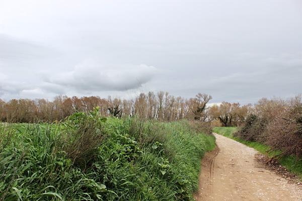 Camino a Huesca... o al Flumen, según se mire