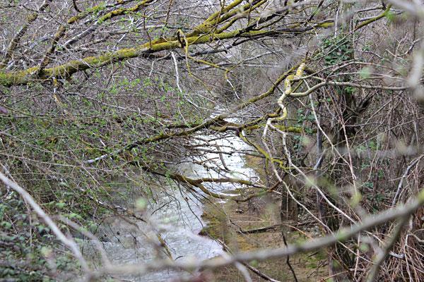 El Flumen entre ramas