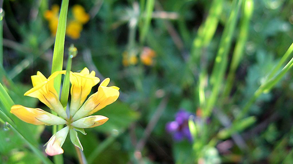 Flora. Santa María de Belsué