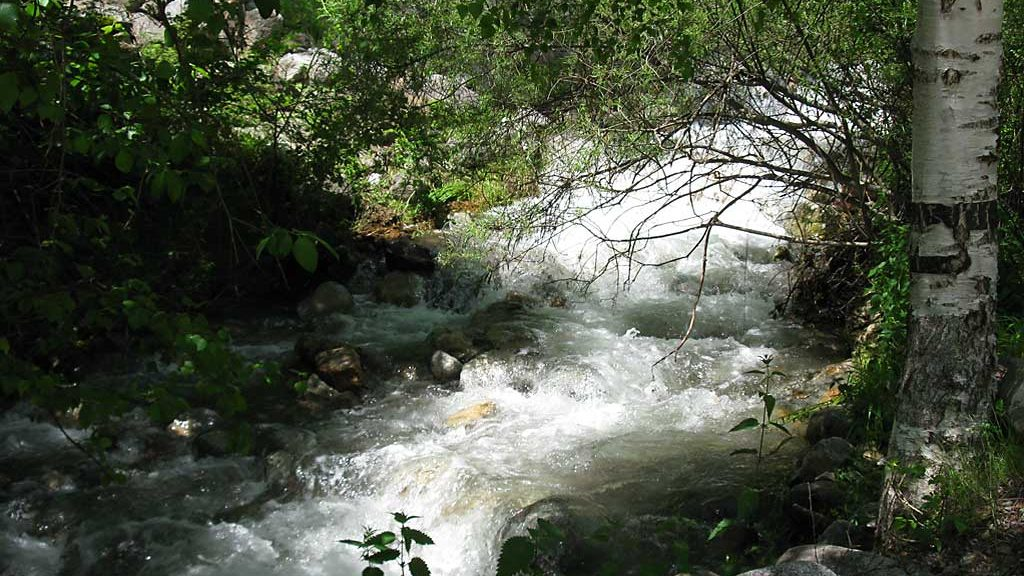 Rio Cinqueta