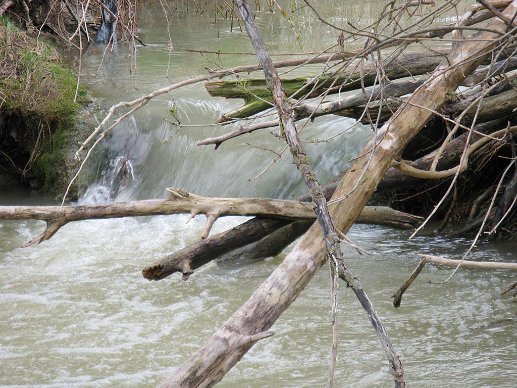 Cauce del Flumen