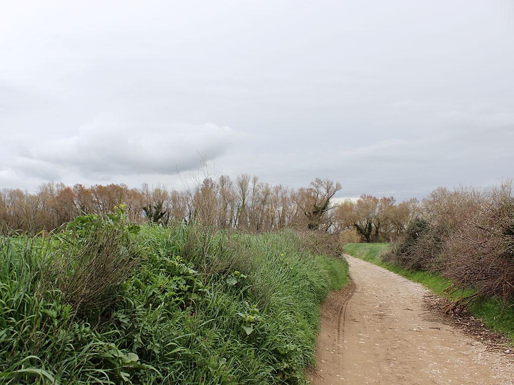 Hacia Huesca desde el Flumen