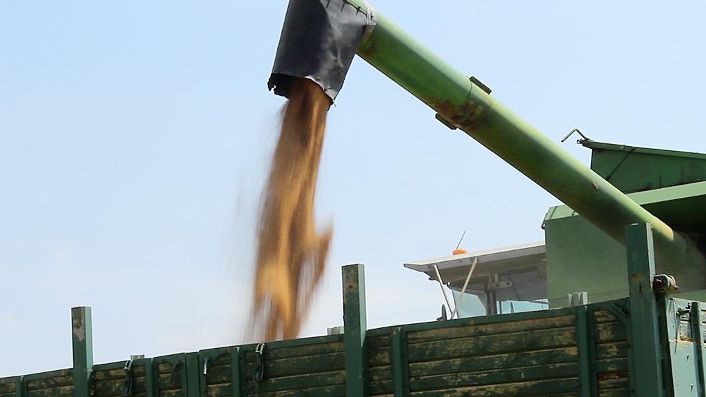 Cosecha de trigo en Huesca