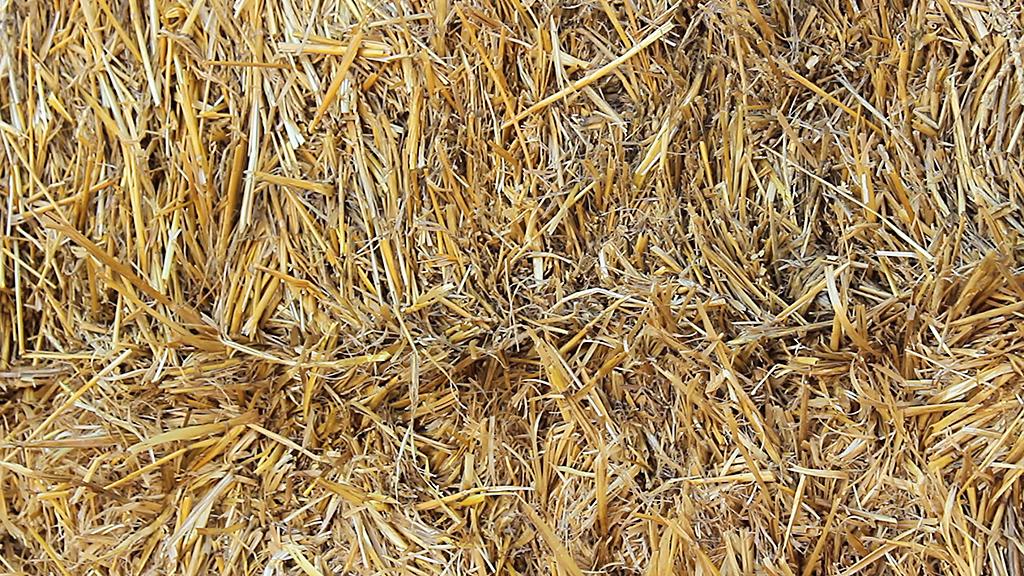 Borguil de paja cerca de Valdabra
